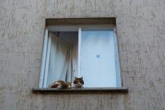 Chat de Chambre Photo libre de droits