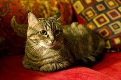 Chat de Chambre sur le divan rouge Photo stock