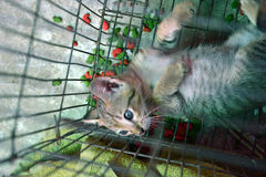 Chat de chaton Images libres de droits