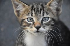 Chat de chatons image stock
