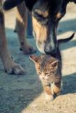 Chat de chien et de chiot Photos stock
