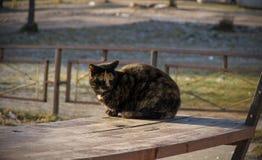 chat de couleur trois se reposant sur un banc Photo libre de droits