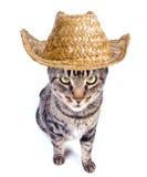 Chat de cowboy Images libres de droits