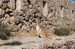 Chat de Crète dans Fortezza de Rethymno, île de Crète, Grèce Photo stock