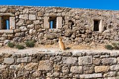 Chat de Crète dans Fortezza de Rethymno, île de Crète, Grèce Photos libres de droits