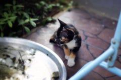 chat de cutie Images libres de droits