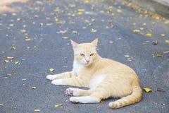 Chat de Cuty sur la route avec des feuilles Image stock