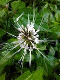 Chat de fleur images stock