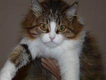 chat de fourrure de plots réflectorisés de hause de chat beau Images libres de droits