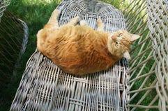 Chat de Garfield Photographie stock libre de droits