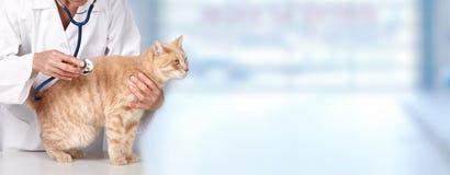 Chat de gingembre avec le docteur vétérinaire. photos stock