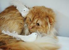 Chat de gingembre avec les oiseaux blancs Image libre de droits