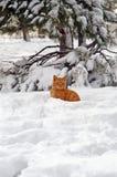 Chat de gingembre dans la neige Images libres de droits