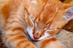Chat de gingembre de sommeil Images libres de droits