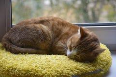 Chat de gingembre endormi sur la fenêtre Photographie stock libre de droits