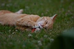 Chat de gingembre s'étendant dans le jardin Image libre de droits