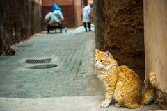 Chat de gingembre se reposant dans sordide du Maroc Photographie stock libre de droits