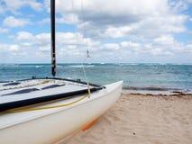 Chat de Hobie sur la plage Images libres de droits