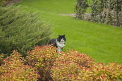 Chat de jardin Photographie stock