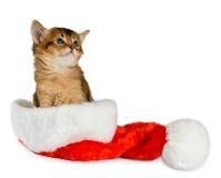 Chat de Joyeux Noël avec le chapeau de Santa sur le blanc Image stock