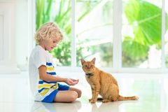 Chat de maison d'alimentation des enfants Enfants et animaux familiers photo stock