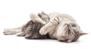 Chat de maman avec des chatons Image libre de droits