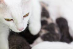 Chat de maman avec ses chatons Images libres de droits
