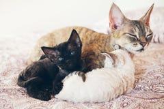 Chat de maman avec ses chatons Amour et tendresse Images stock