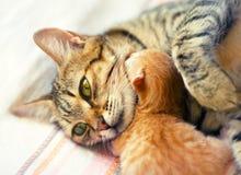 Chat de maman et chaton nouveau-né Image libre de droits