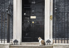 Chat de Mouser de chef du Downing Street 10 Image stock
