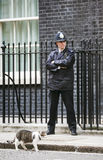 Chat de Mouser de chef du Downing Street 10 Images libres de droits