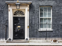 Chat de Mouser de chef du Downing Street 10 Photo libre de droits