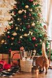 Chat de Noël Photos stock