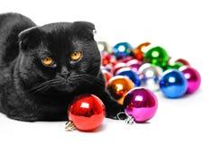 Chat de pli d'écossais et jouets noirs de Noël Sur le fond de images libres de droits