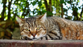 Chat de repos Images stock