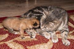 Chat, chat de repos avec le chien Photo libre de droits