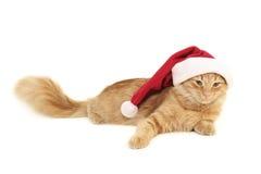 Chat de rouge de Noël Image libre de droits