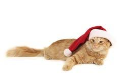 Chat de rouge de Noël Photo libre de droits