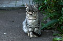 Chat de rue photos stock