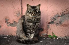 Chat de rue photographie stock