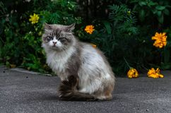 Chat de rue image stock