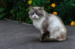 Chat de rue images libres de droits