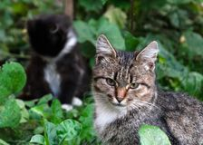 Chat de rue photo stock