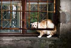 Chat de ruelle Photographie stock