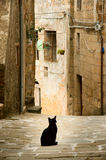 chat de ruelle Photos libres de droits
