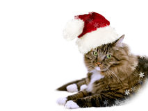 Chat de Santa Image stock