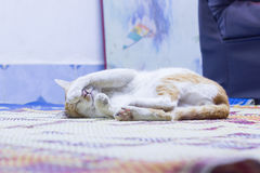 Chat de sommeil Photos stock
