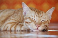 Chat de sommeil Photo libre de droits