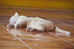 Chat de sommeil Image stock