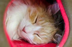 Chat de sommeil Images stock